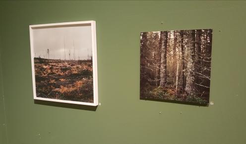Kalhygge av Sara Linderoth och Skog av Sara Linderoth